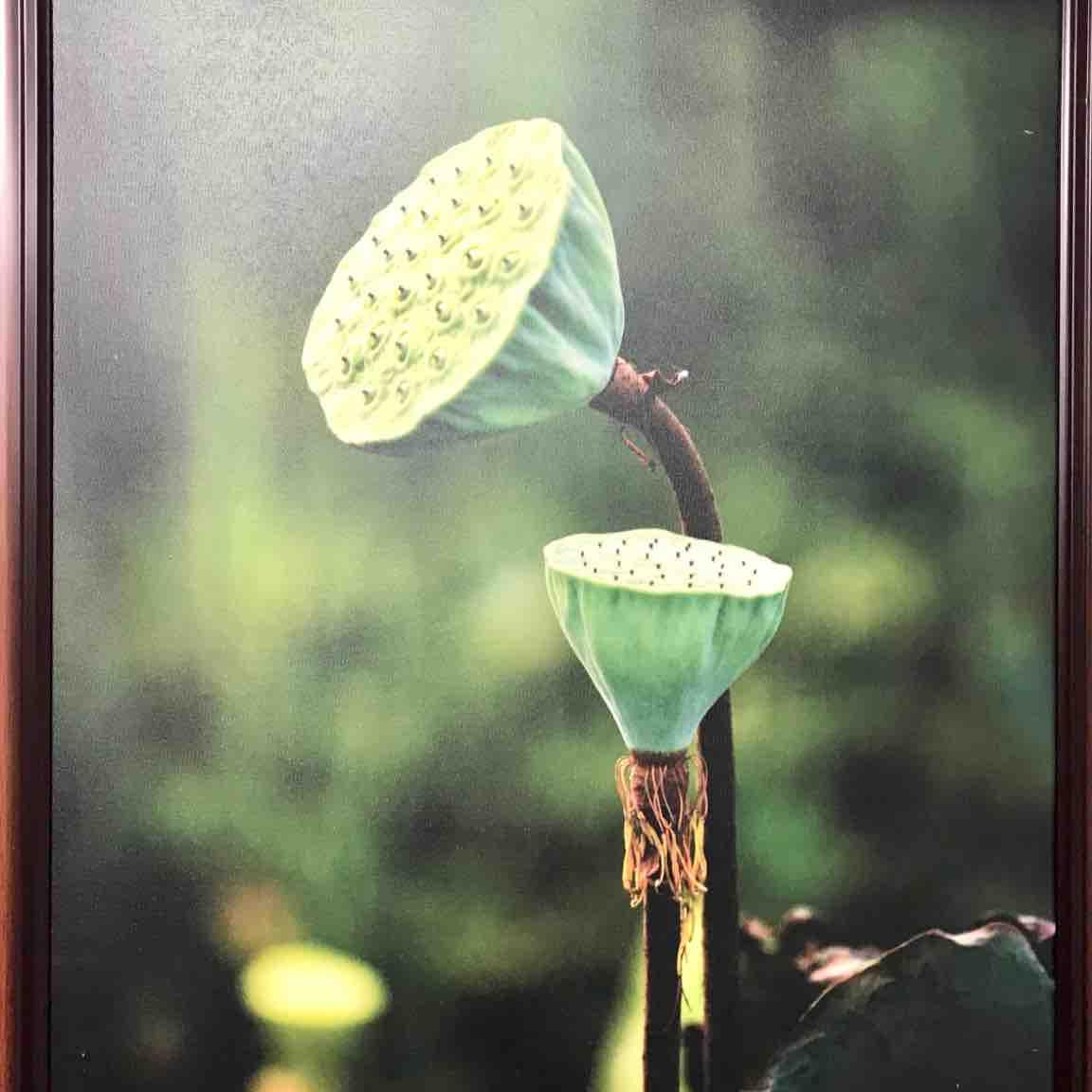 Lotus Thuỵ