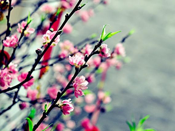 Thì Thầm Mùa Xuân